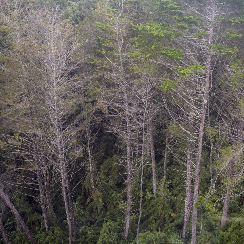 sem titulo 02, árvores.png