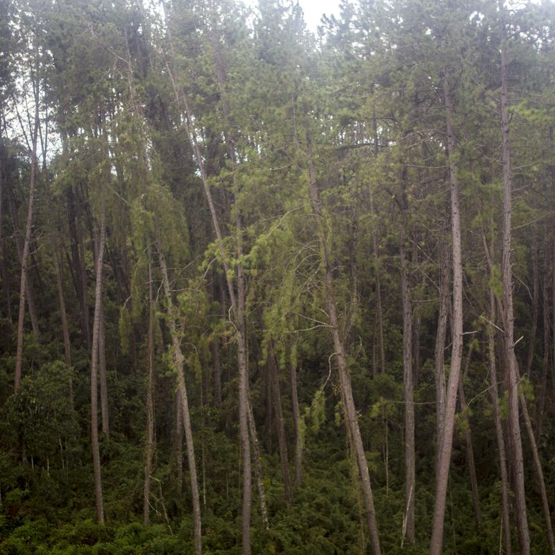 sem titulo 05, árvores.png