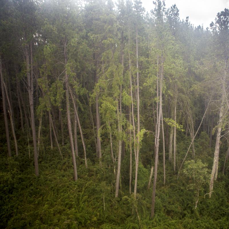 sem titulo 06, árvores.png