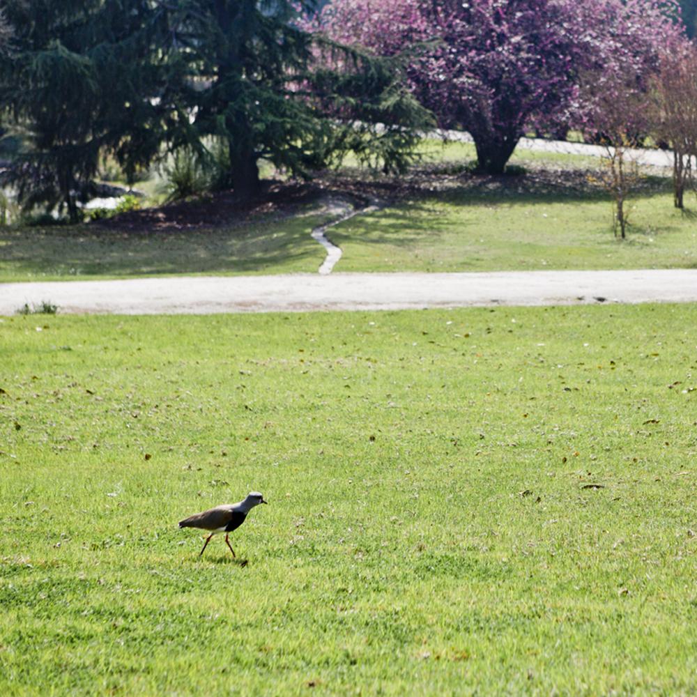 Pássaro na vinícola