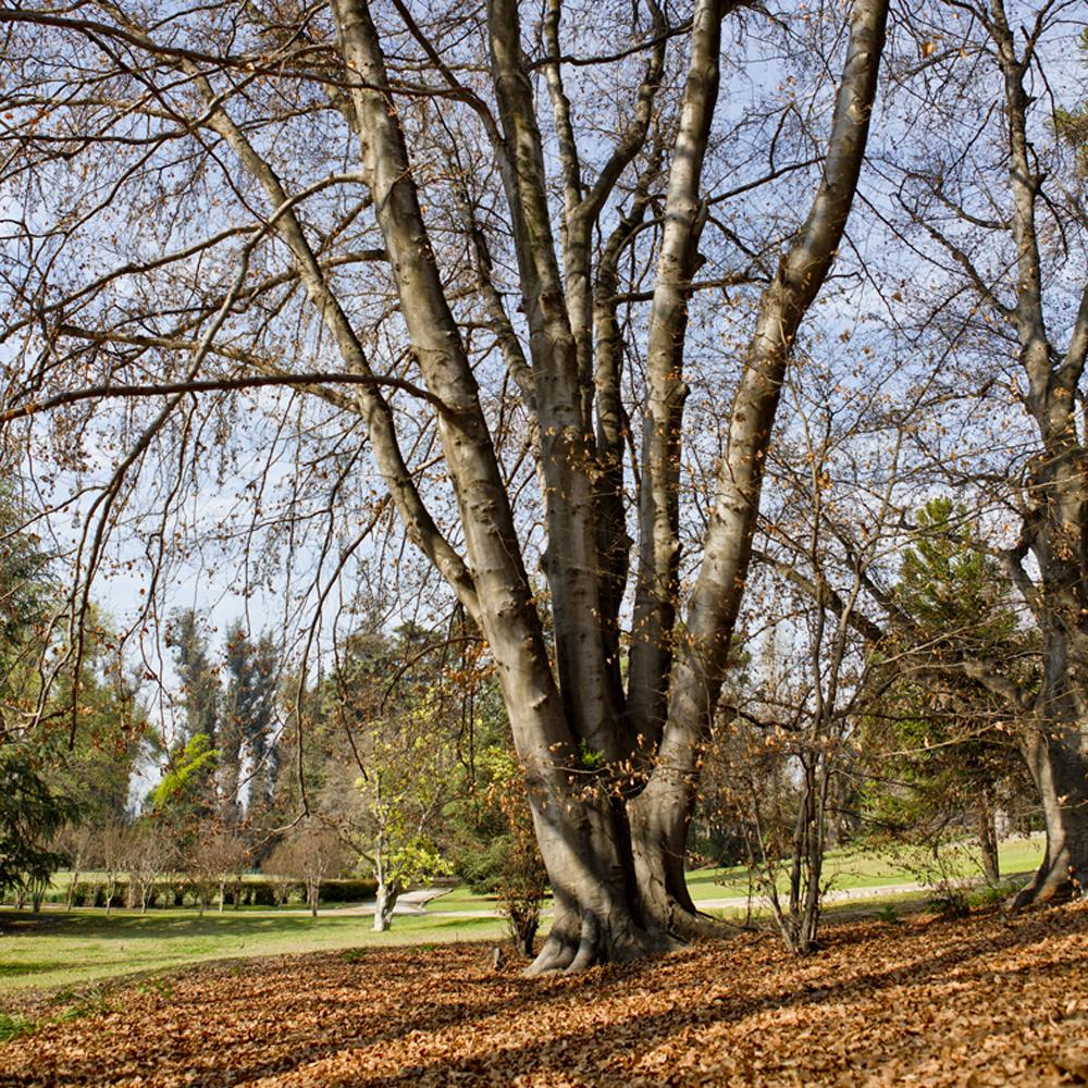 Jardim Concha y Toro, 4