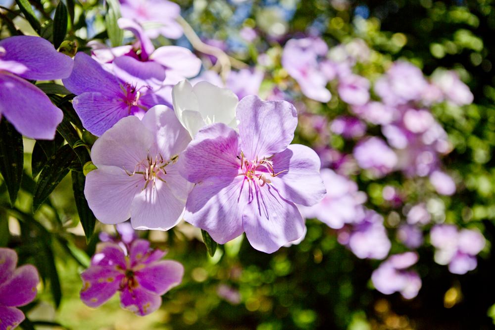 Flores no Tankamana, 01