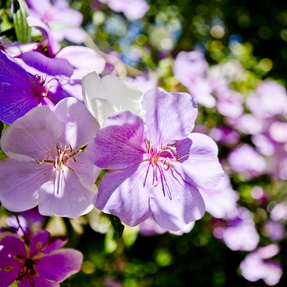Flores no Tankamana, 02