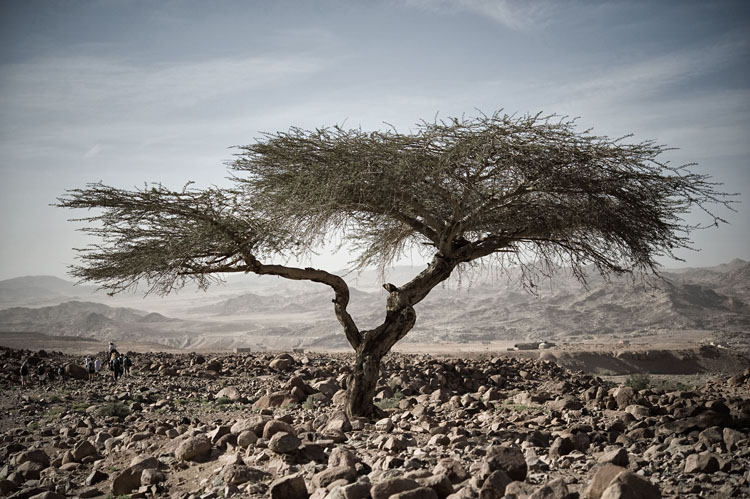 dyd-yoga-fusion-holiday-desert-tree.jpg