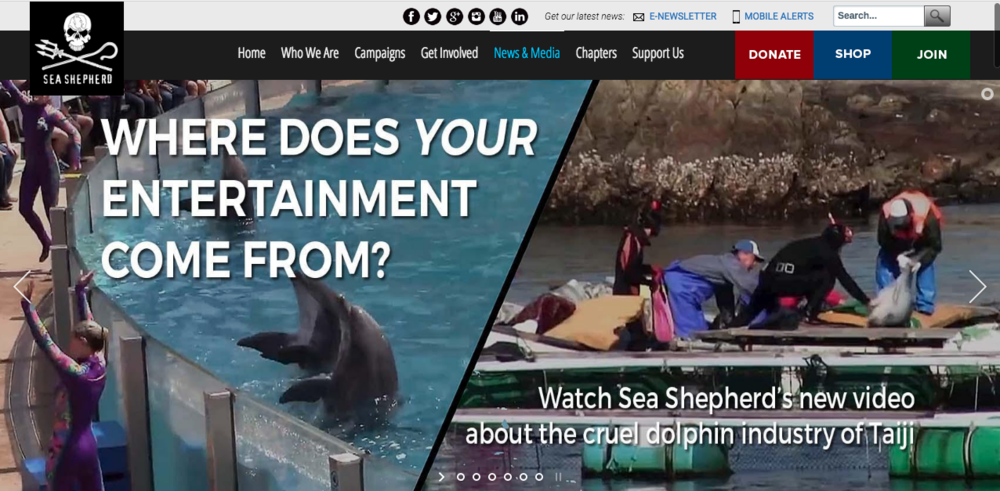 Watch Sea Shepherd's new video here