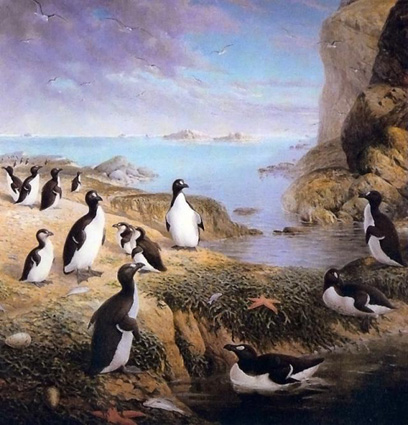 Extinct Great Auks