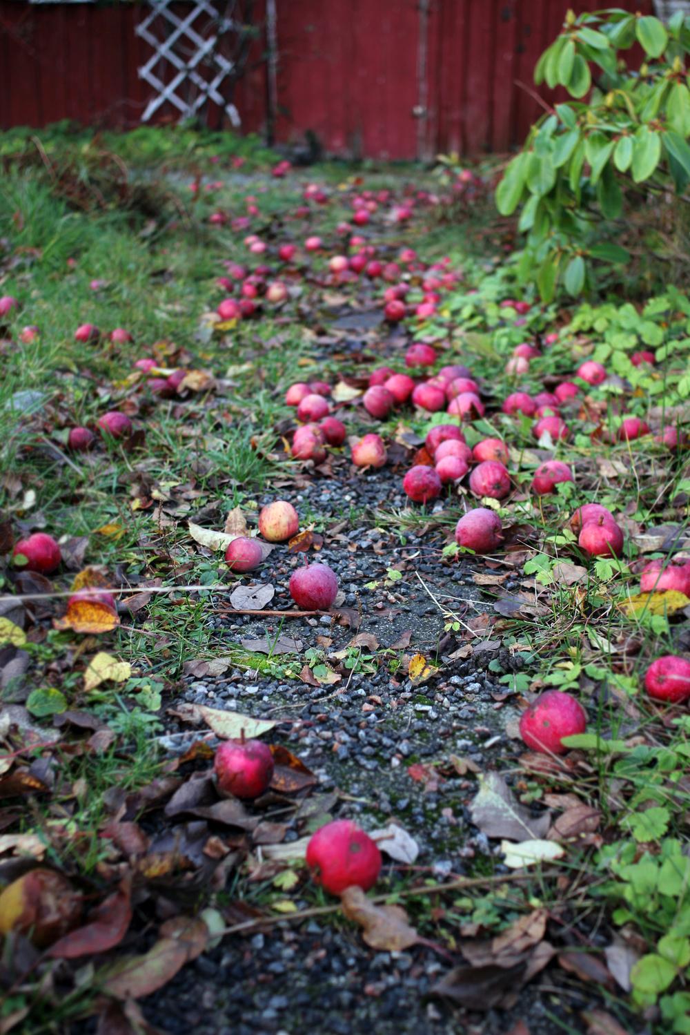 äppelgång äppelsprång.jpg