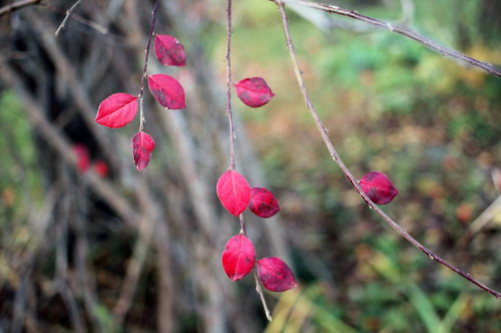 lil leafs.jpg