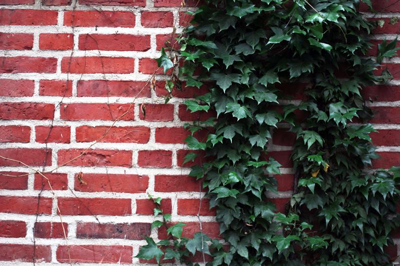 murgrön vägg.jpg