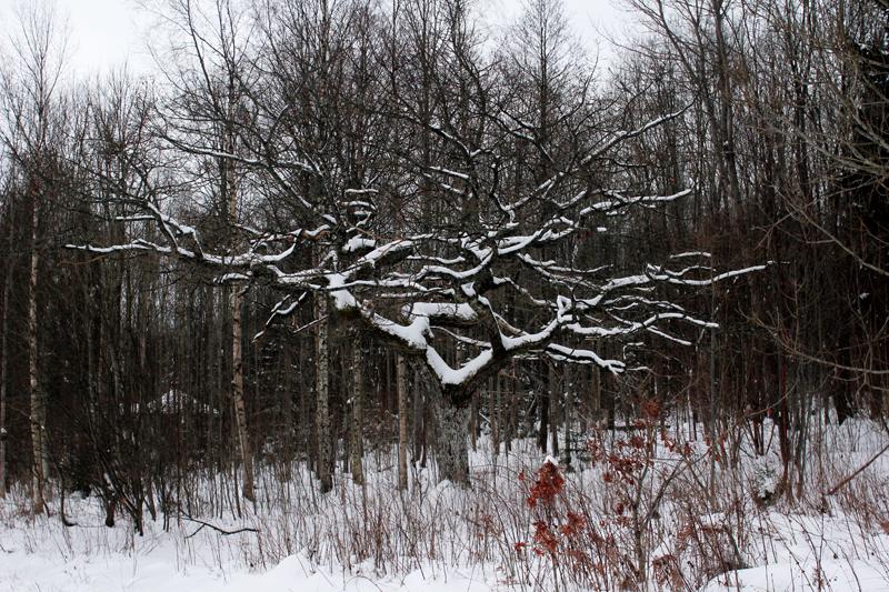 snöträdet.jpg