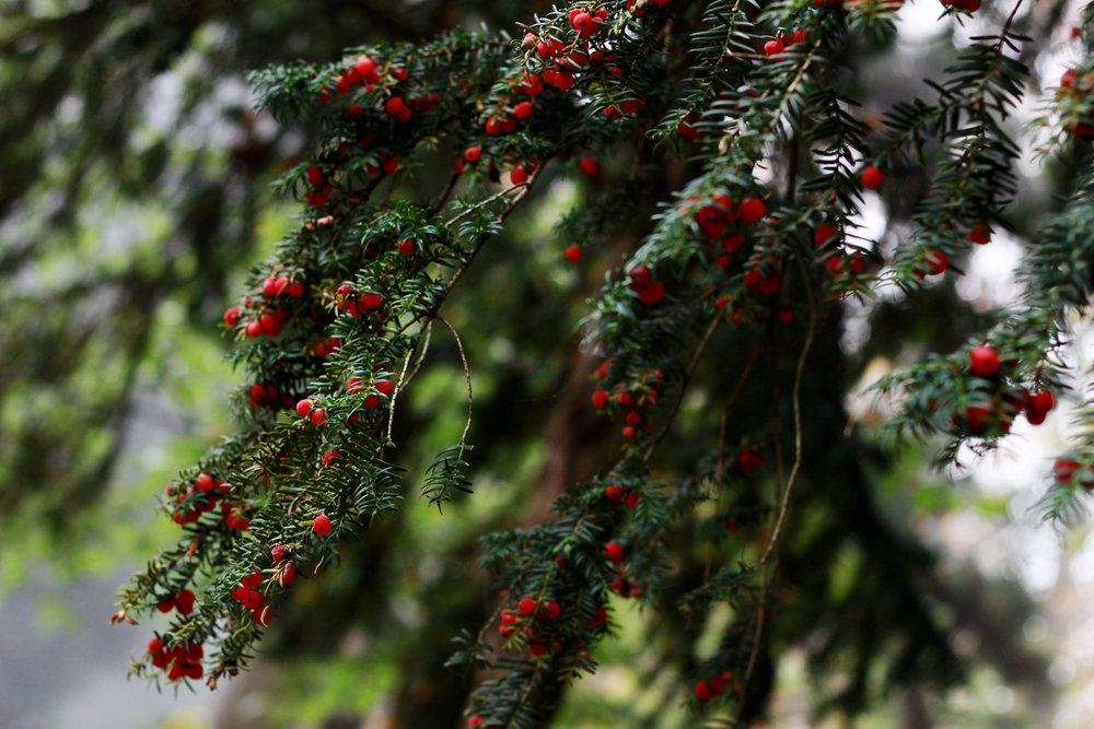 rödabär.jpg