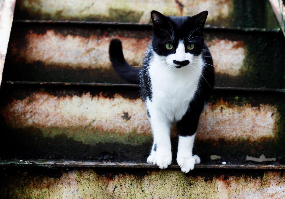 katty.jpg