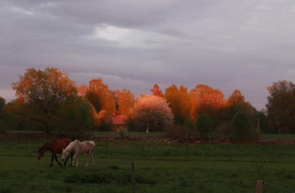 hästljus.jpg