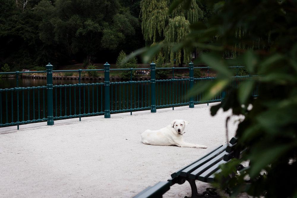 stalka hund.jpg