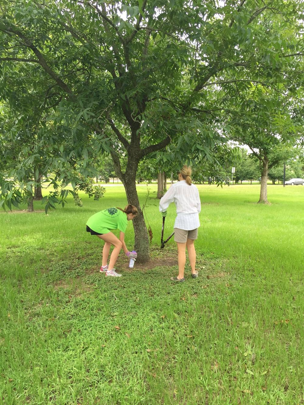 009_Memorial Park Triangle_06.15.2015.JPG