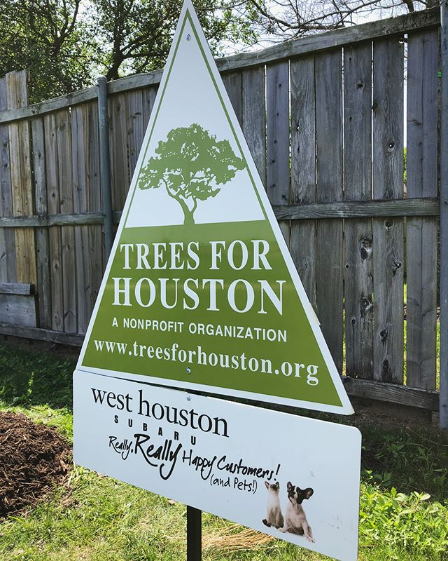 Thank you to West Houston Subaru for planting trees with us today! These will help create a sound barrier for the stadium at The Village School!