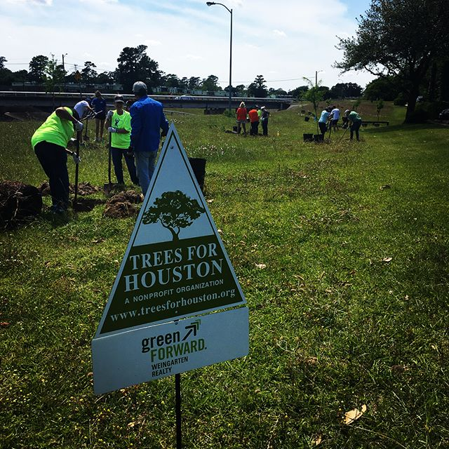 Thank you, @weingartenrealty for helping us beautify White Oak Bayou! 🌳🌳🌳 #treesforhouston #bayougreenways