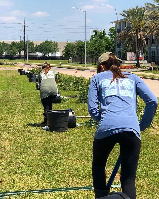 That's a wrap! Thank you to all of our volunteers and supporters who helped make this planting season a success, and a huge shout out to Trees For Houston staff, for spending endless days hard at work in and out of the office! #treesforhouston