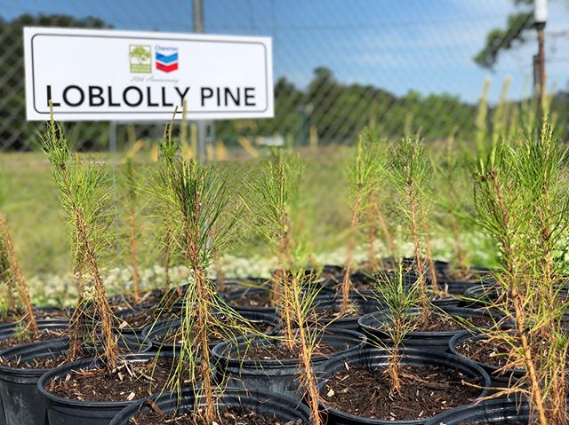 Planting season may be over, but we are still working hard to make sure that all of our trees continue to grow for upcoming projects! 🌱🌳