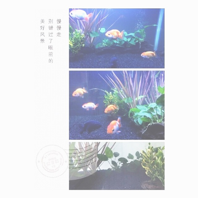 a reader sent in this image of his feng shui #aquarium, read his question and my answer on my blog! holisticspaces.com #luck #fengshui #goldfish