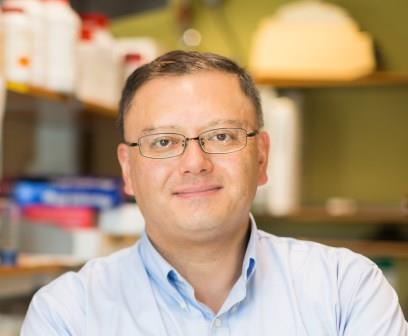 Takao Hensch , PhD, Director of NIMH Silvio Conte Center Professor of Molecular and Cellular Biology (Harvard University) Professor of Neurology (Boston Children's Hospital) Director, IRCN (UTIAS)  Hensch Lab Website
