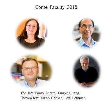 Conte Faculty: (Top Left) Paola Arlotta, Guoping Feng, (Bottom Left) Takao Hensch, Jeff Lichtman