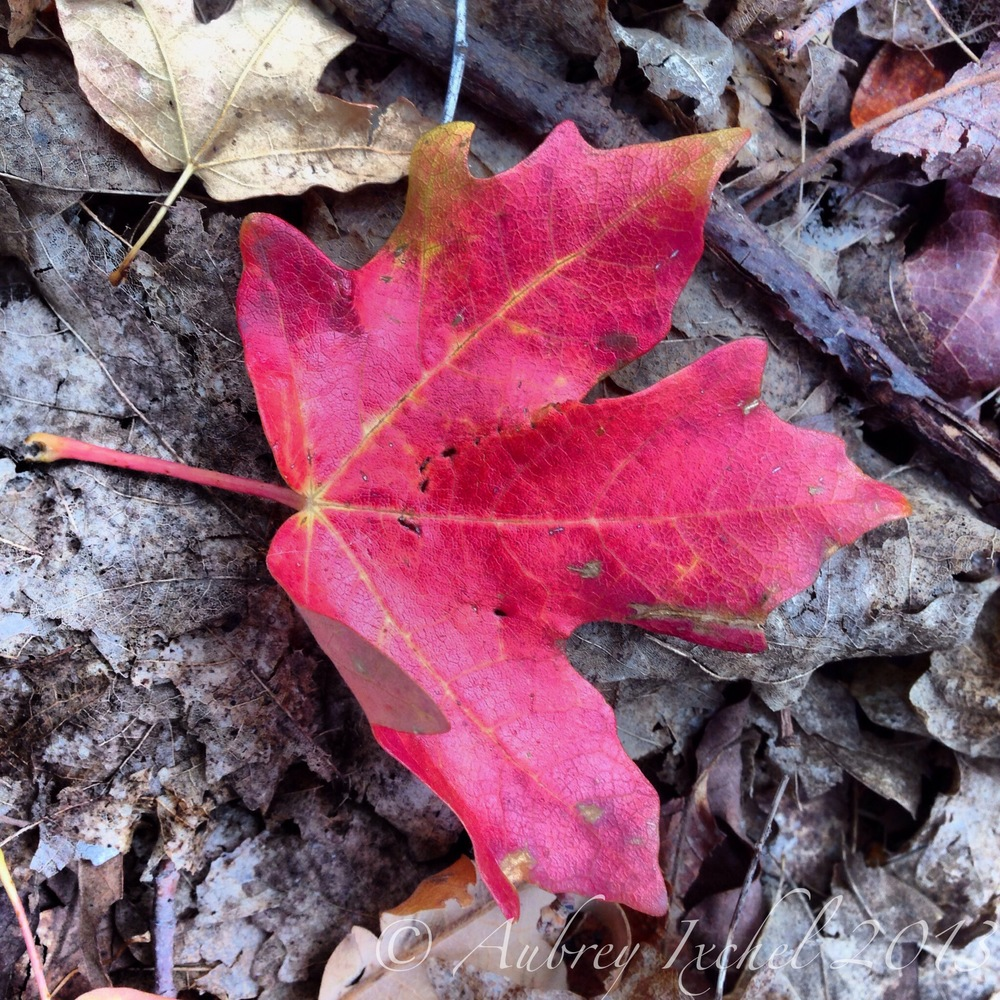 Photo Oct 04, 5 08 51 PM.jpg