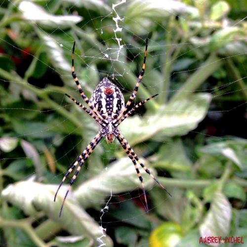 spidermedicine.jpg