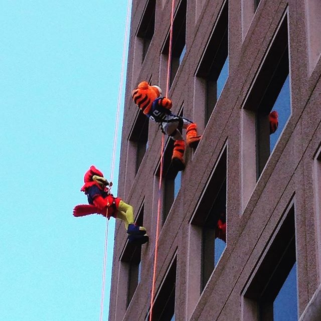 Love this city! Tigers and Redbirds Mascots rappelling down the Raymond James building in downtown Memphis!