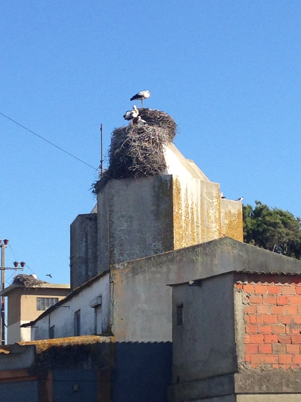 Storks nest at Comporta (06/2014)