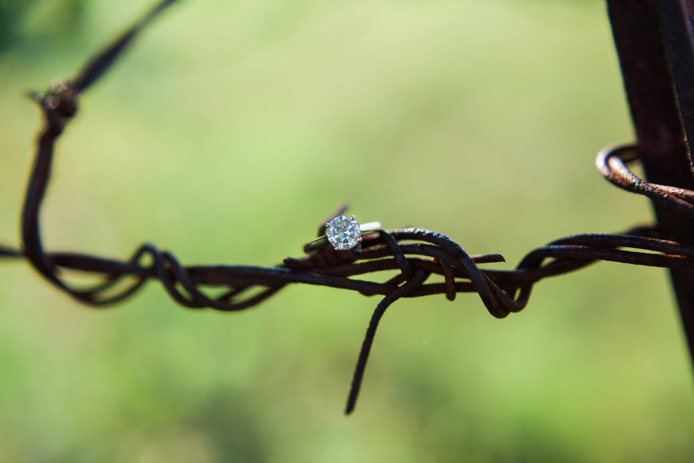 Engagement ring on wire at Ellery Farms