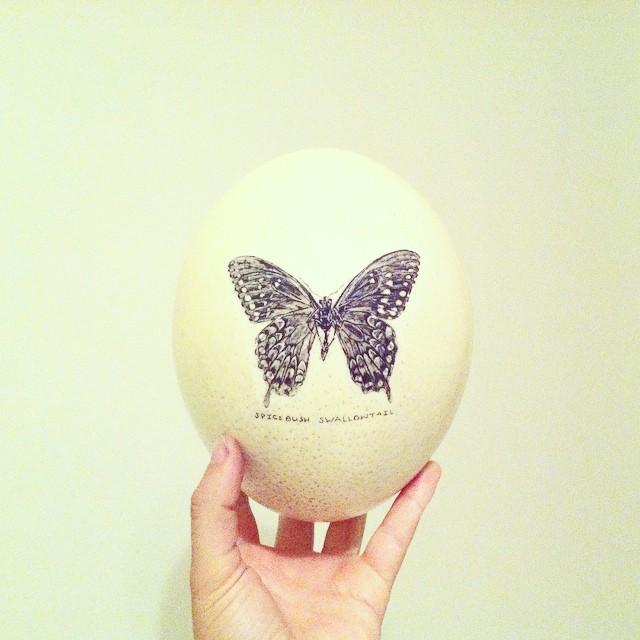 LB - Spicebush Swallowtail.jpg