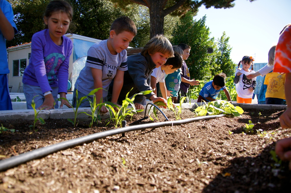 Kinder Gardening