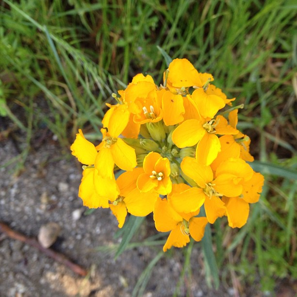 Bloomin wildflowers. (Taken with  instagram )
