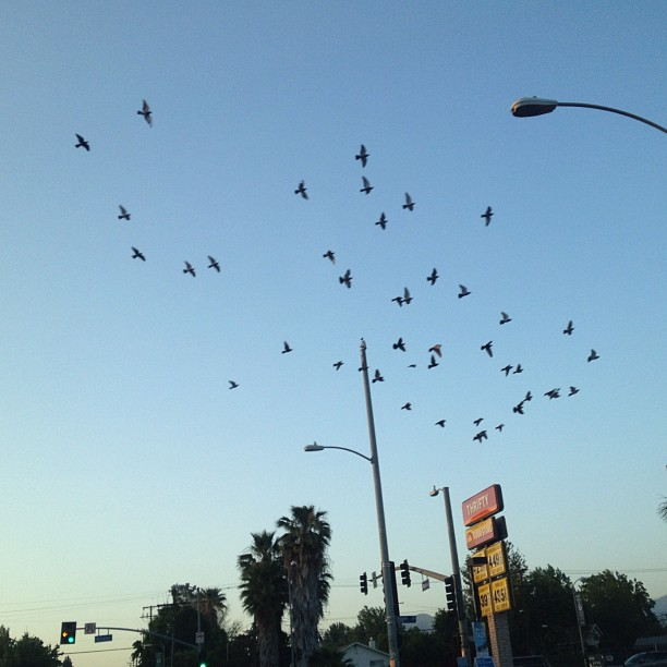 Valley birds. (Taken with  instagram )