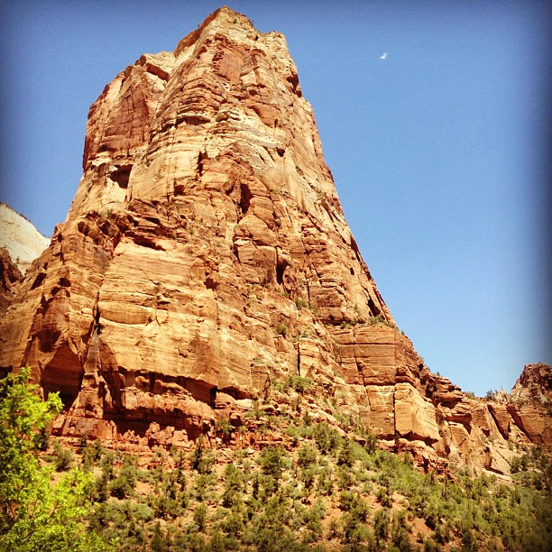 Zion's angel? Bird? (Taken with  Instagram  at Angel's Landing)