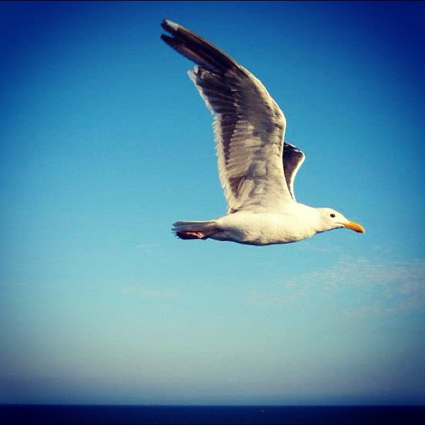 Wings up flight! (Taken with  instagram )