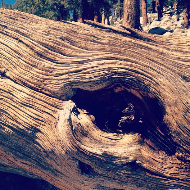 Woodeye. (Taken with  Instagram )