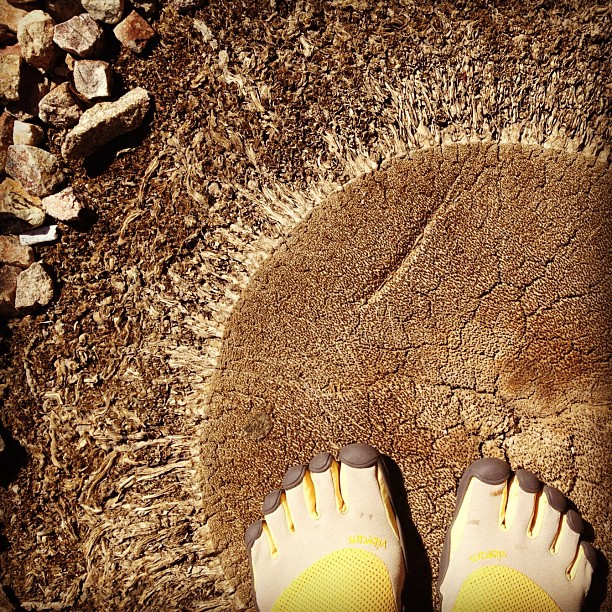 These feet were made for hiking.  (Taken with  Instagram )