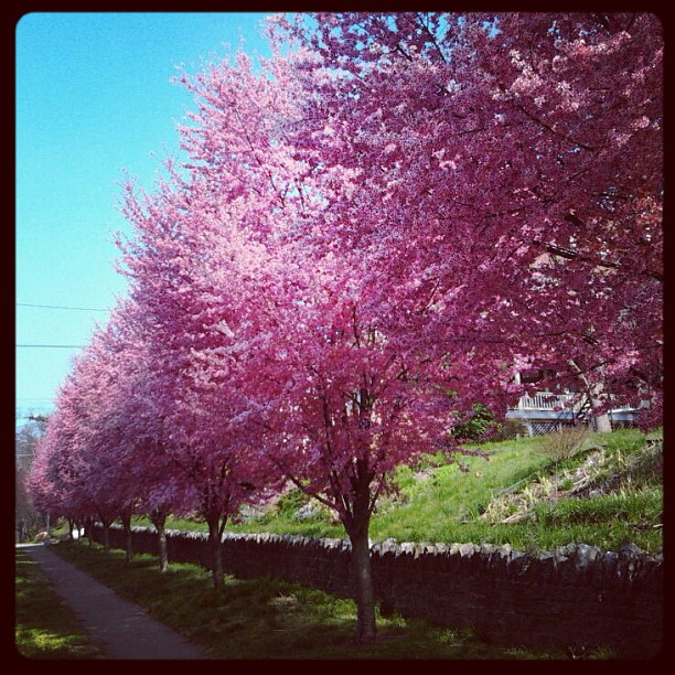 Received a photo surprise from a friend in Philly suburbia. Spring!