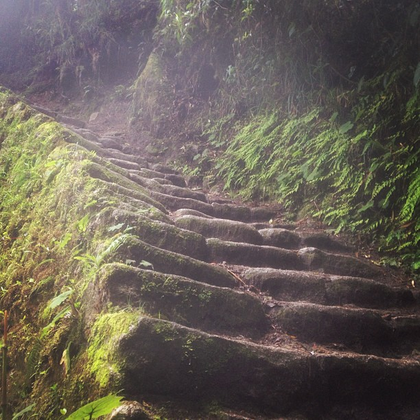 Just a snippet. 🌿 #incatrail #rainforest #jungle #ohmywhoa