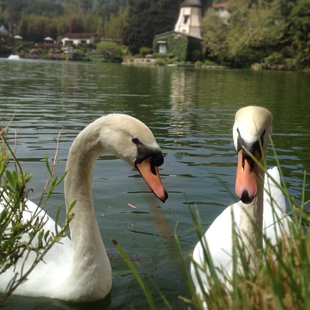 Meet Lila & Sundar, brother and sister. #ohana  (at Lake Shrine Temple)