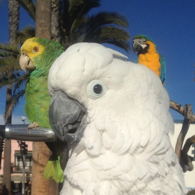Every bird look right! 🐦  (at Santa Monica State Beach)