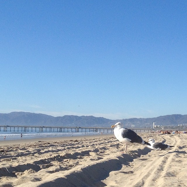 Two sunbathing seagulls. #onmybackview #venicepier #nofilter  (at Marina Del Rey Beach)