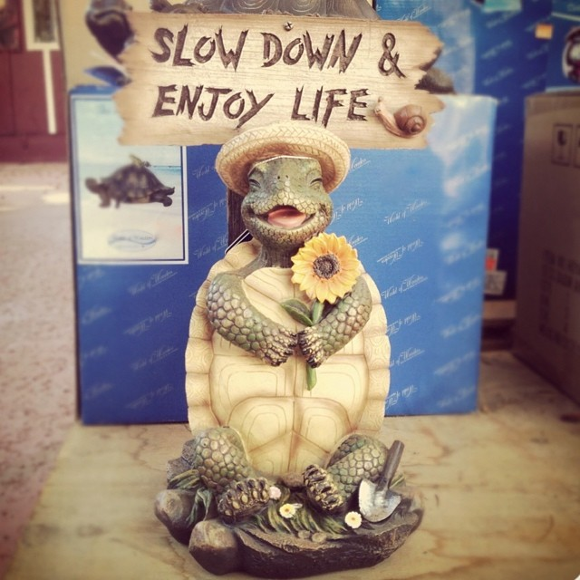 Time flies n its hard to keep up sometimes…so just a quick memo for all o us. Don't forget, live it up, nice and slow baby. #tbt #trinket #yeahsiesta #quality #heartbeat #quickquickslooow #turtlepower #repostomypost