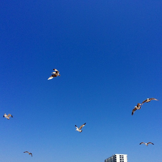My memorial weekend moment. #52514 #seven #freebirds #peace   #tower26 #santamonica #nofilter