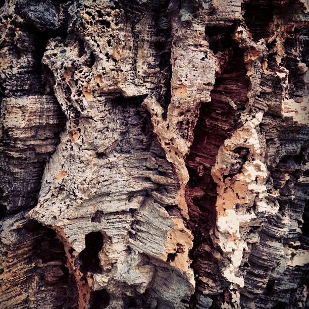 Cork tree. (Taken with  instagram )