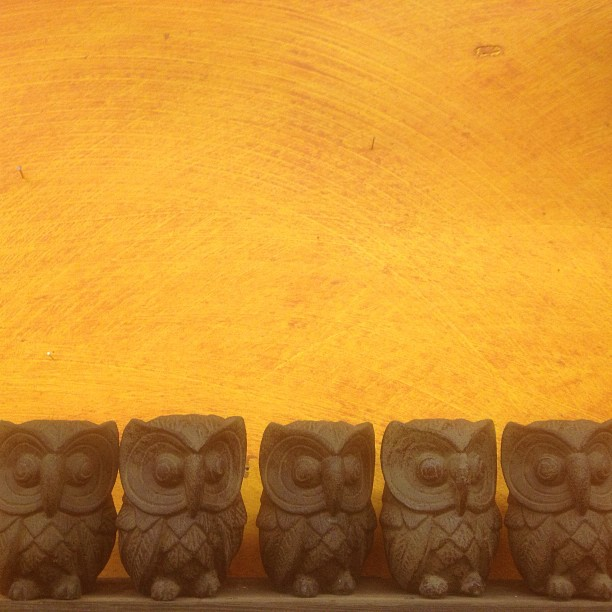 One, two, three, four, five owls. #hoot