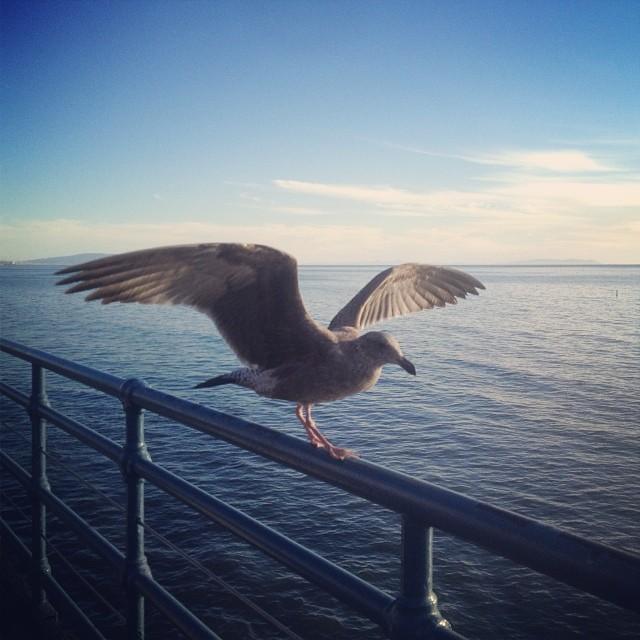 Be the bird, have faith.