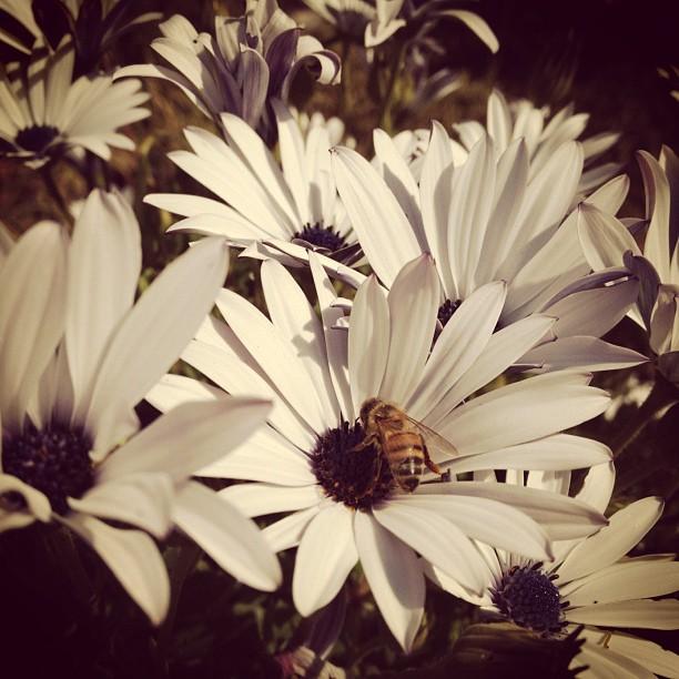 Let it Bee. (Taken with  instagram )